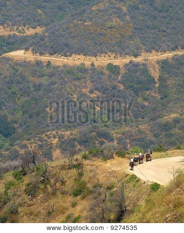 Shot Of Horseback Riding Trail