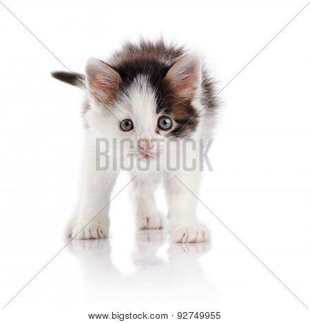 The Spotty Kitten.