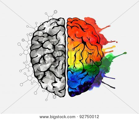 Concept of the human brain