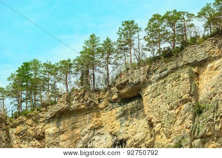 Pine Trees On The Cliffs.