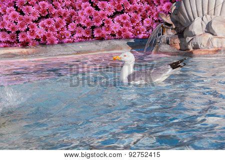 seagull in fountain