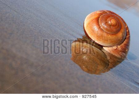 Seaside Snail