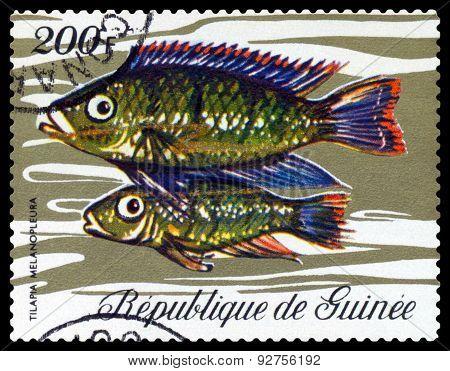 Vintage  Postage Stamp. Fish Tilapia Melanopleura.
