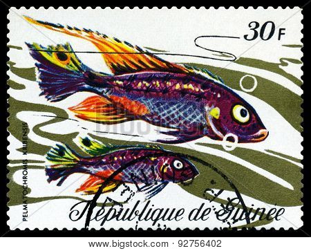 Vintage  Postage Stamp. Fish Pelmatochromis Krbensis.