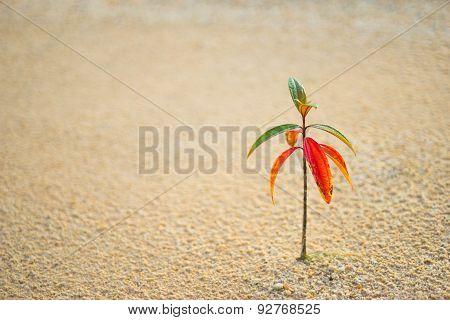Lonely Plant Flourishing after Rain
