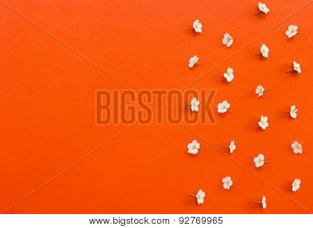 White Flowers  With Copy-space On Orange Background.useful As Background
