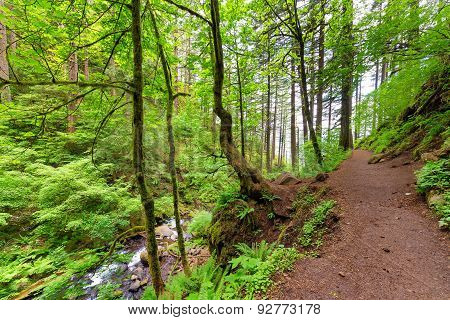Columbia River Gorge Trail