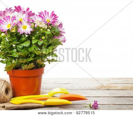 Potted flower and garden tools. Isolated on white background