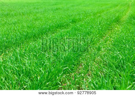 Green grass field meadow