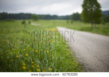 Blurred road with flowers in the ditch