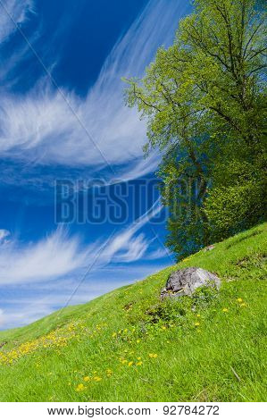 Springtime Tree On The Flowering Meadow Hillside Under Blue Sky