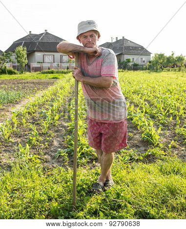 Farmer Hoeing Vegetable Garden