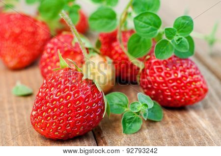 Strawberry And Oregano