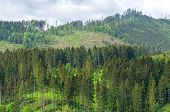 picture of grub  - View of wooded hills and with cut down trees Beskids mountains Poland - JPG