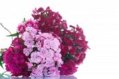 picture of carnation  - bright bouquet of carnations on a white background - JPG