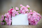 foto of carnation  - bright bouquet of carnations on the table - JPG
