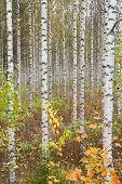 picture of october  - Autumn forest - JPG