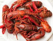 stock photo of craw  - several boiled craw - JPG
