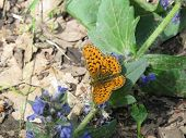 foto of marshes  - Marsh butterfly sitting on the grass in the forest - JPG