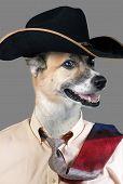 image of cowboy  - Good looking cowboy dog with black cowboy hat - JPG