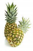 pic of uncut  - Two whole uncut pineapple fruit  - JPG