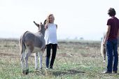 stock photo of donkey  - Beautiful couple relaxing on a field with horses and donkeys around - JPG
