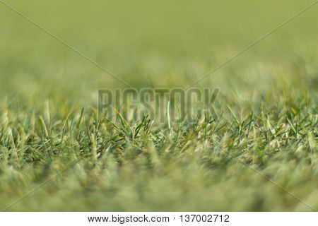 Artificial green grass shot low down  and close up with thin depth of focus.