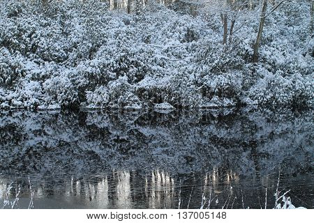 Winter tree reflection in icy winter pond