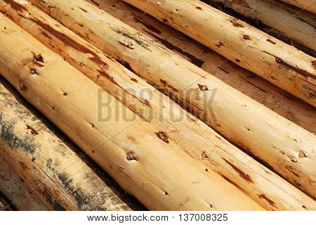 Wood Lumber Heap of Pine Tree Uncorked Logs