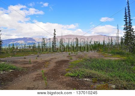 Tundra in the foothills of the Putorana plateau. The landscape of the tundra the Putorana plateau Siberia Russia.