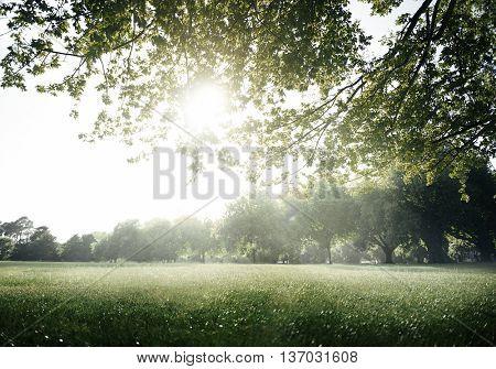 Green Field Park Environment Scenic Concept
