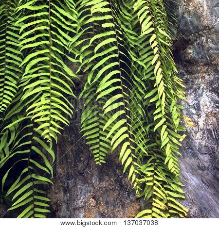 Botanic Houseplant Garden Green Concept