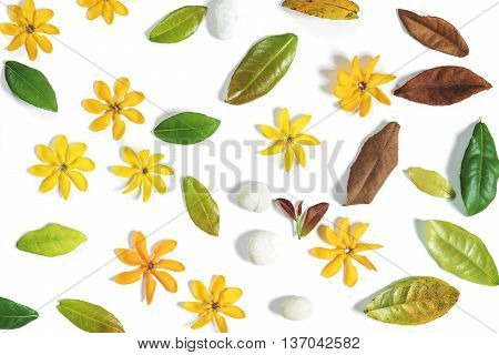 Yellow flowers, green leaves and white pebble stones on white background