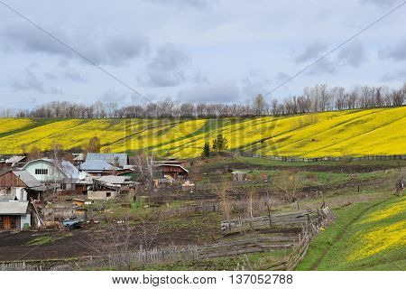 Mountain strewn with yellow flowers near the village