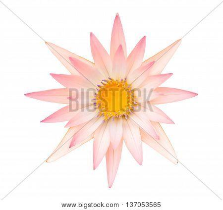 Orange Lotus Or Range Water Lily Isolated