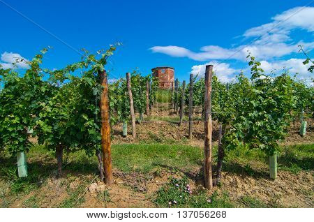 hill covered with vines with historic watchtower and wooden poles according to tradition