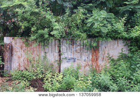 Abandoned rusty metal fence covered with tree and plant