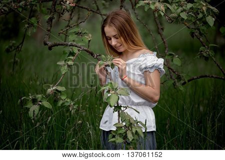 Young Woman Up On A Ladder Picking Apples From An Apple Tree On