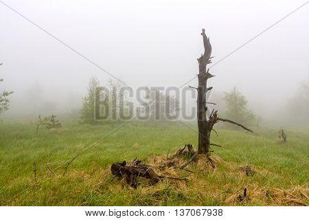 old dead tree on foggy meadow
