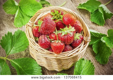 Freshly picked strawberries in basket with green leaves around