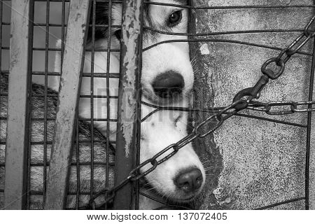 Close up Sad dog locked in the cage