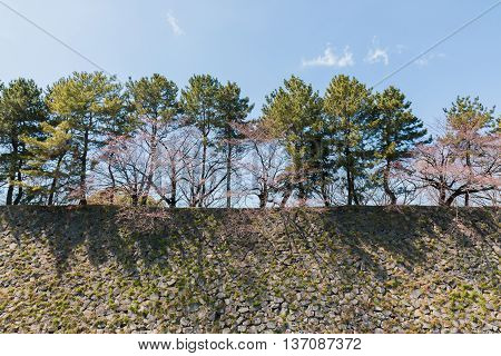 Big stone wall with trees for defence Enemy.