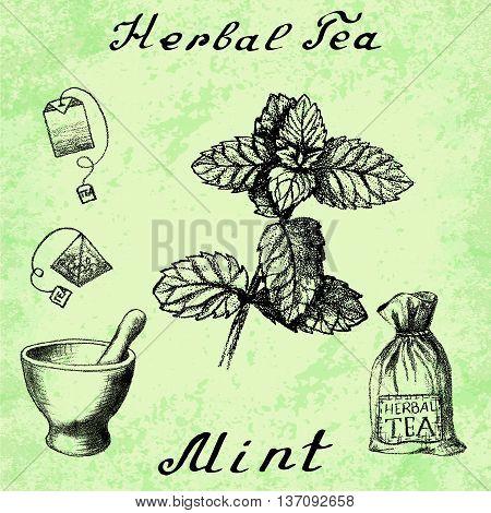Herbal tea mint mortar and pestle bag tea bag. Vector hand drawn illustration. Botanical drawing. Pencil drawing