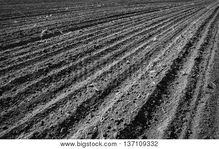 Black and white photo of cultivated field.