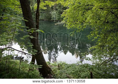Landscape with forest river and trees at foreground
