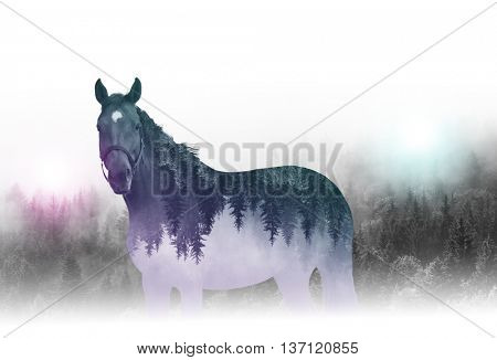 Creative reverse composition or double exposure image of outline of single horse with mirror image of trees