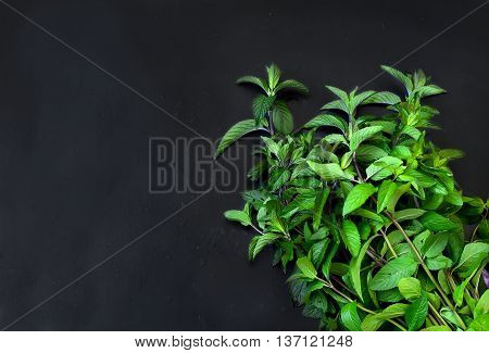 Bunch Of Fresh Green Mint