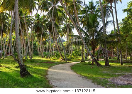 Country road through plantation of coconut trees,   La Digue,  Seychelles