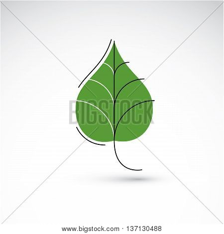 Vector illustration of green birch leaf isolated on white background. Simple drawn nature design element graphic symbol