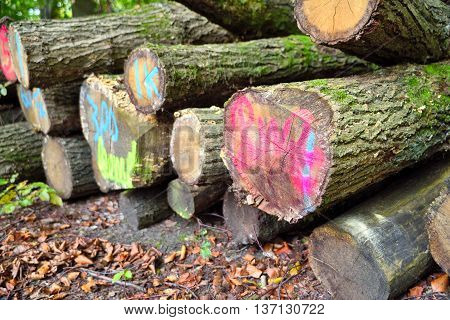 tagged pile of wood, stack of tree trunks in an autumn forest